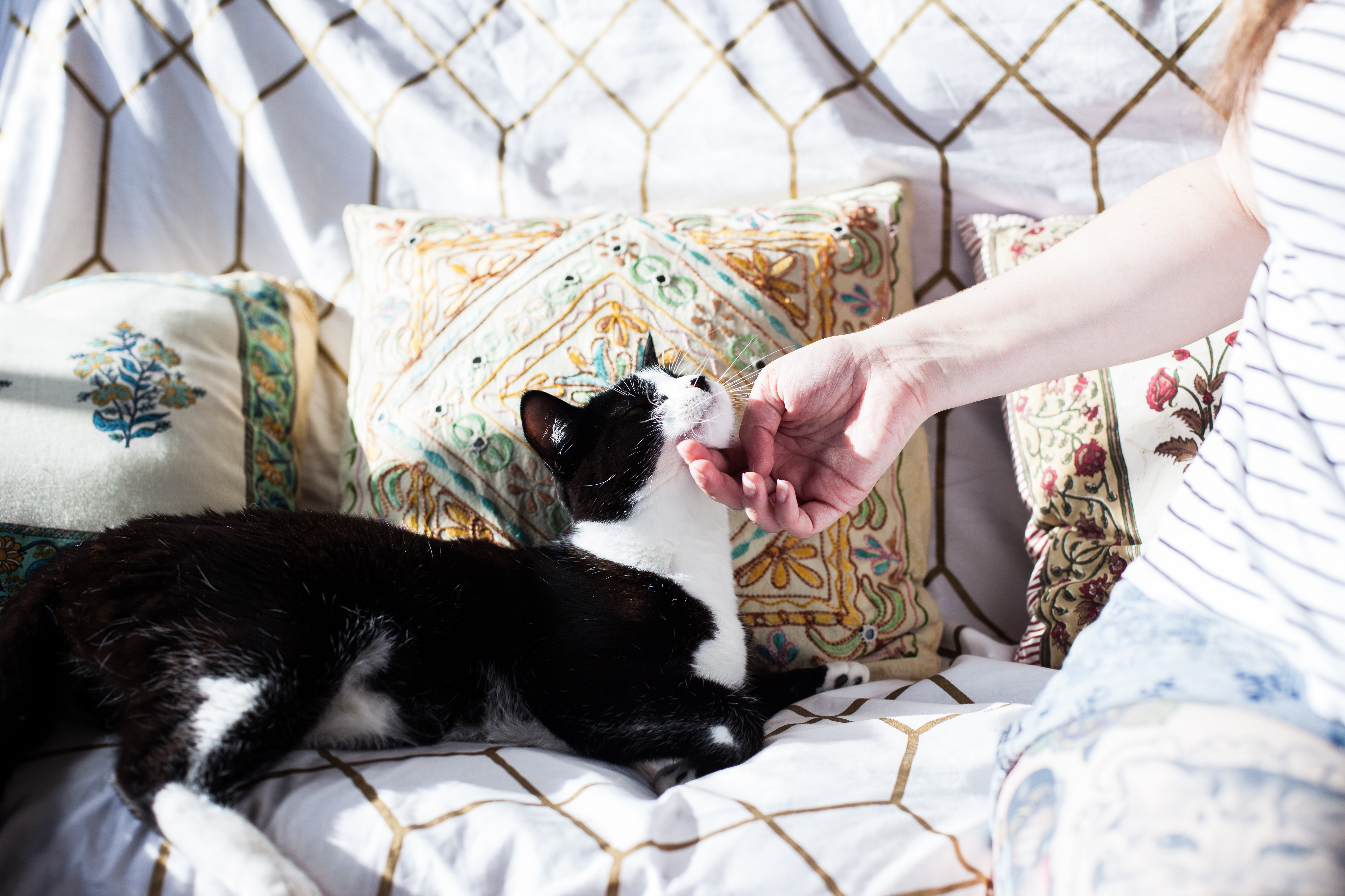 This couple got married inthe presence ofmore than 1,000 cats