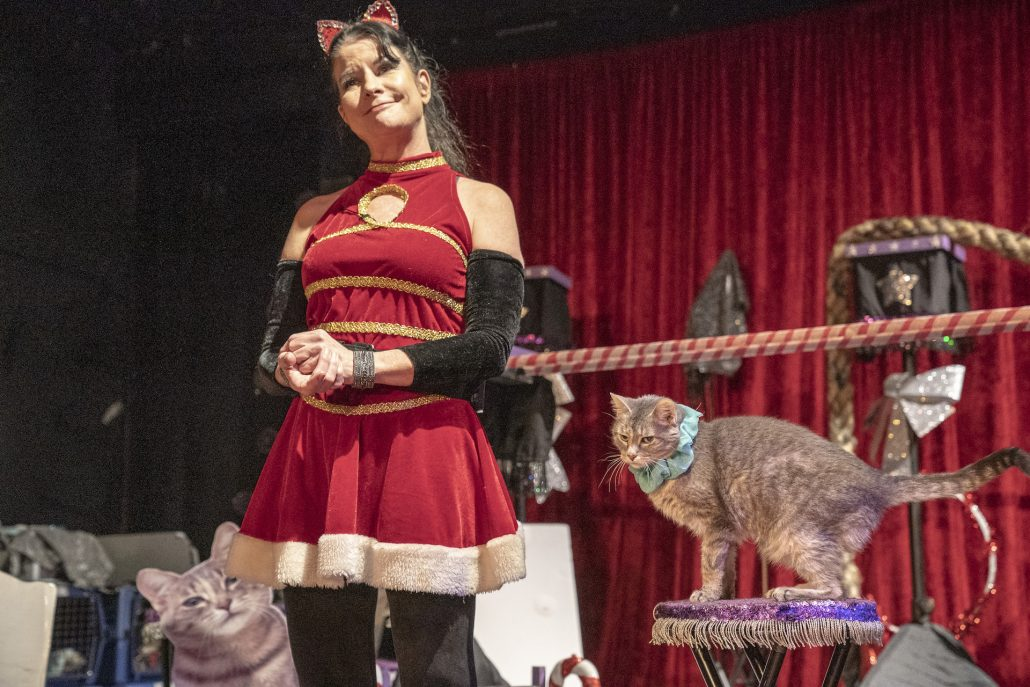 A woman with dark hair in a circus ringmaster's outfit standing proudly in front of posing cats.