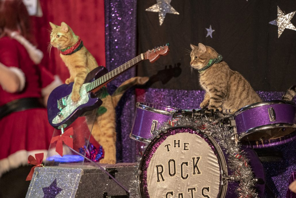 "Two cats playing drum and guitar. The drums say ""Rock Cats"""